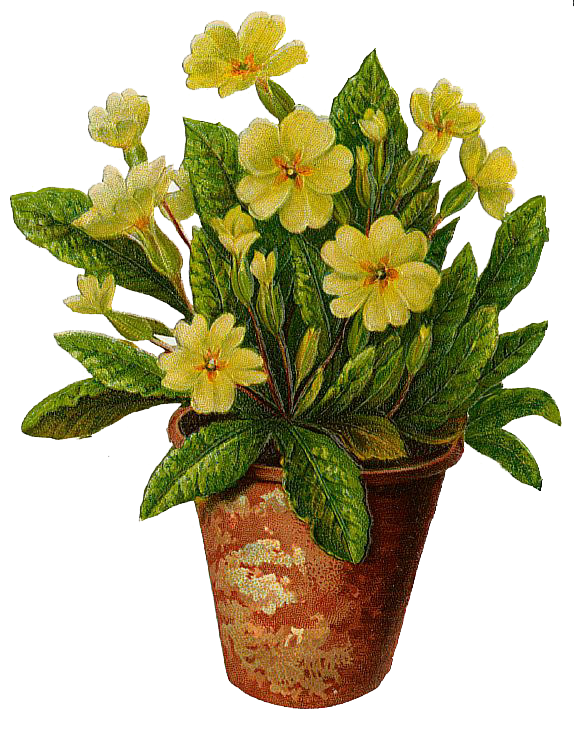 Clipart flower pots banner transparent download The Flower Pot flowers pot free download clip art free clip art on ... banner transparent download