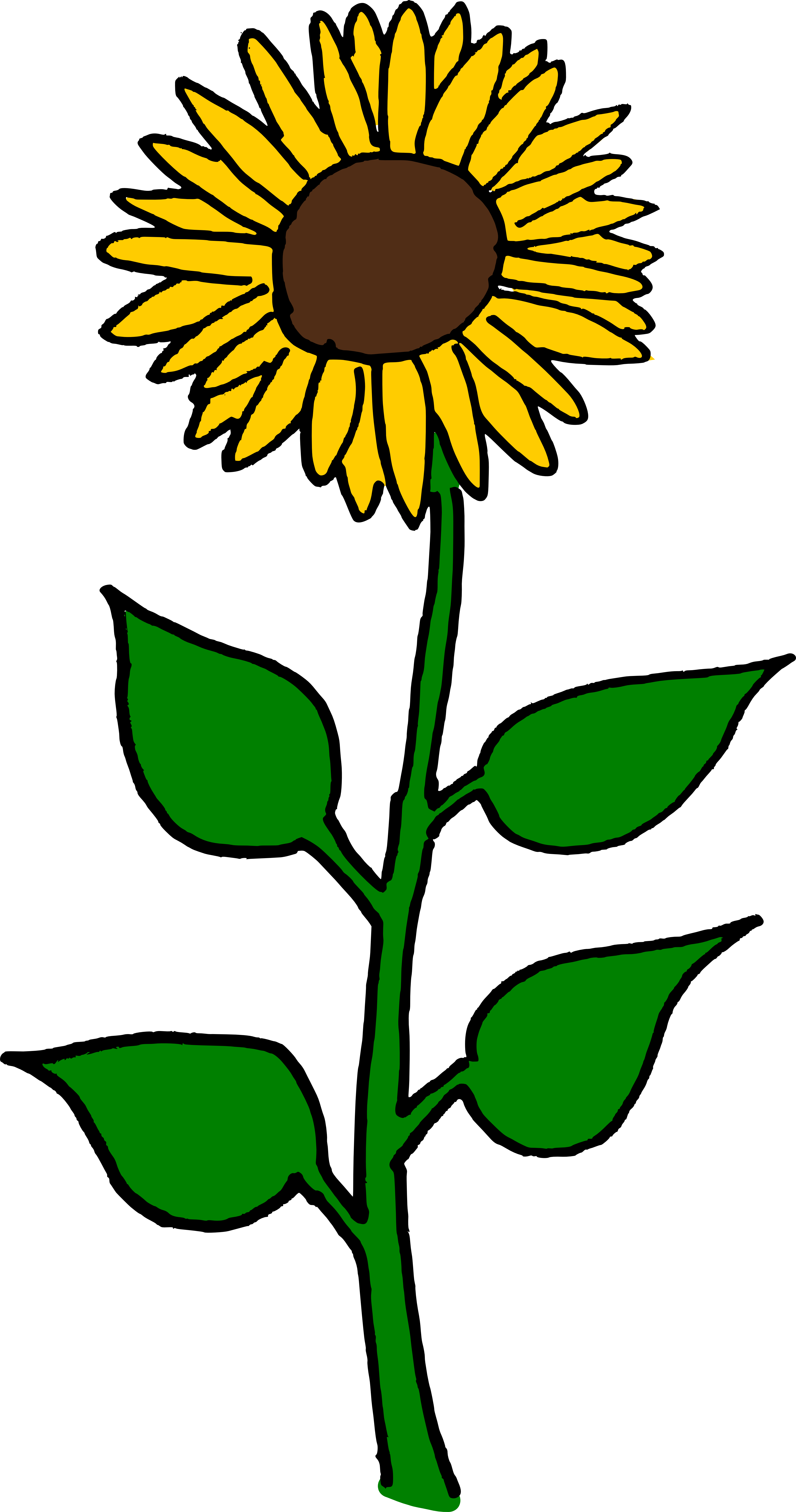 Flower seed clipart image free download Common sunflower Sunflower seed Helianthus giganteus Clip art ... image free download