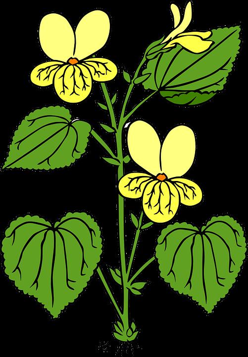 Flower shop clipart. Plant flowering frames illustrations