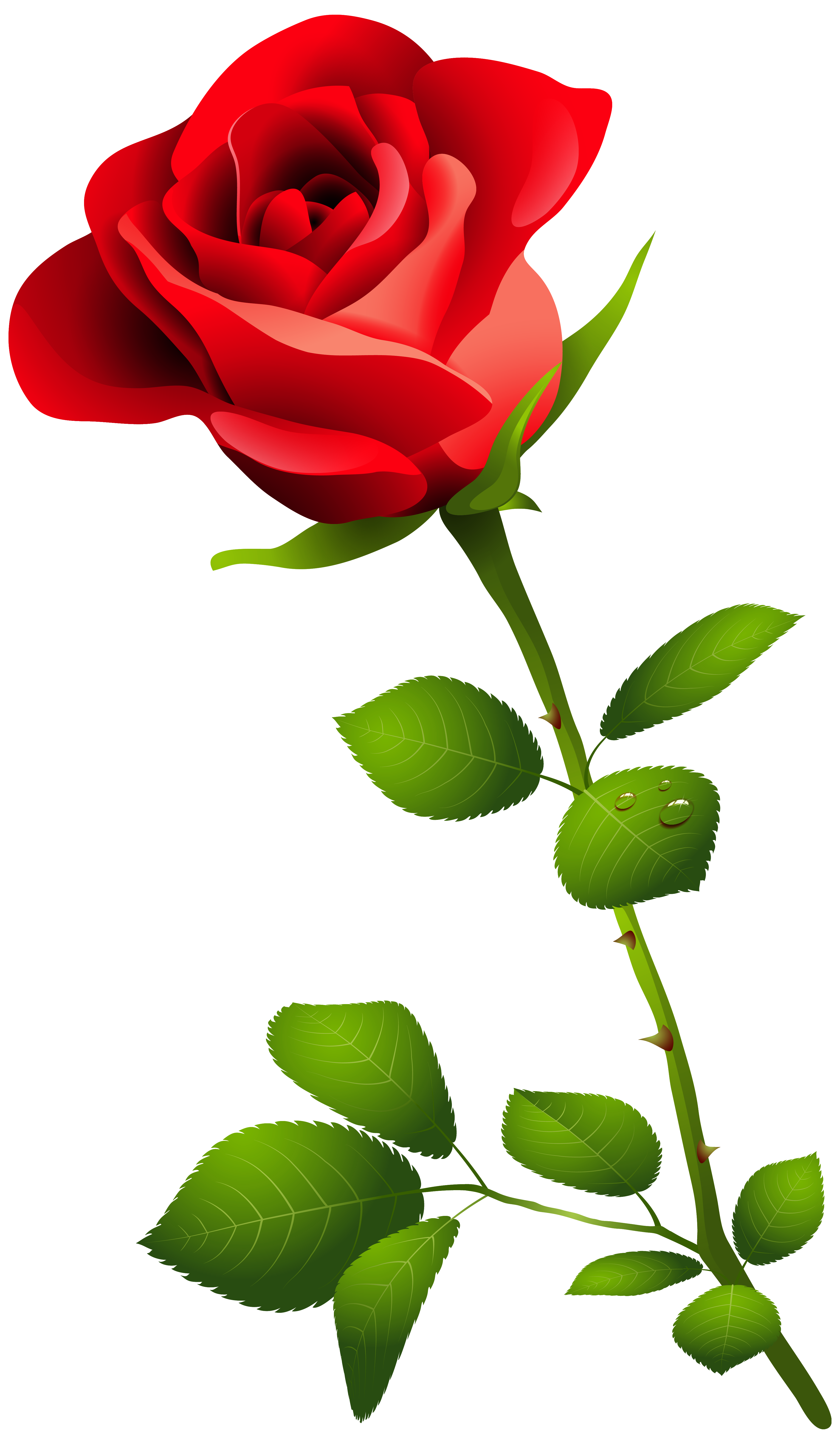 Clipart flower stems vector free download Red Rose With Stem Png Clipart Image Transparent Free Download ... vector free download
