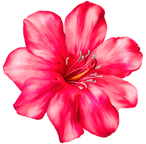 Hibiscus flower drawing clipart picture freeuse Exotic Pink Flower PNG Clipart Picture | Scrapbooking | Pinterest ... picture freeuse