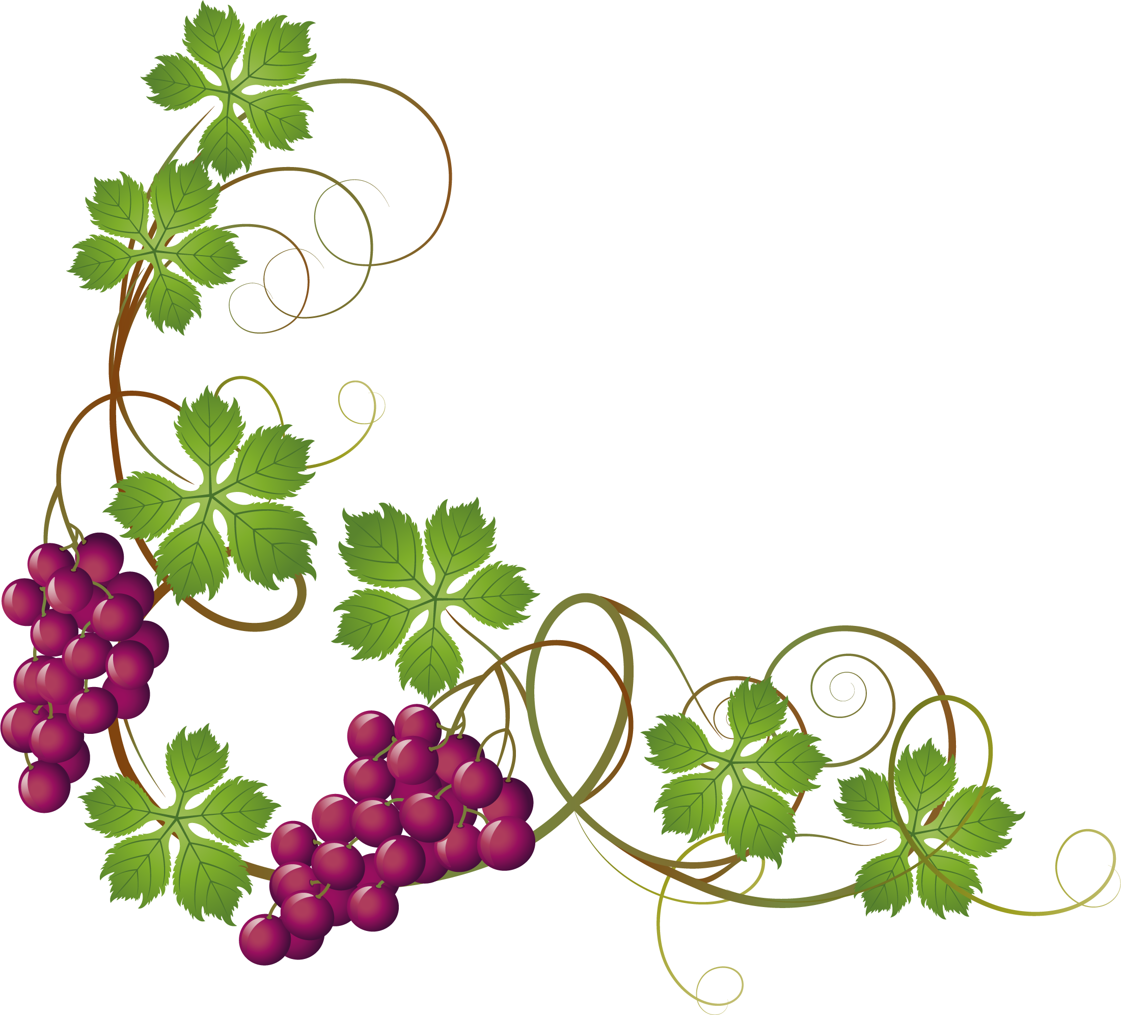 Pumpkin and vine clipart picture royalty free download Grape Vine Clipart at GetDrawings.com | Free for personal use Grape ... picture royalty free download