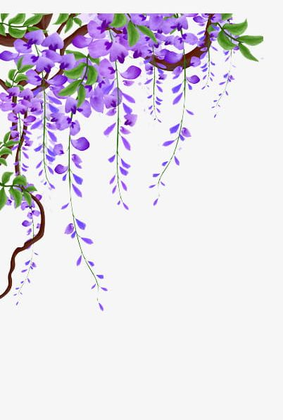 Clipart flower vines picture library download Wisteria Vines Material PNG, Clipart, Flower, Flowers, Flower Vine ... picture library download