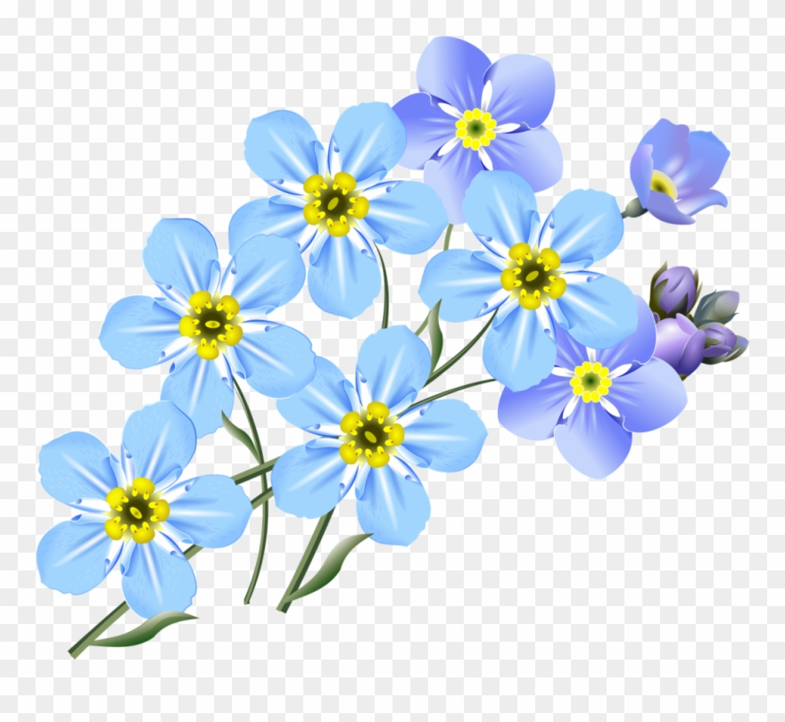Clipart forget me not graphic freeuse library More Images Of Forget Me Not Clip Art Free - Forget Me Nots Drawing ... graphic freeuse library