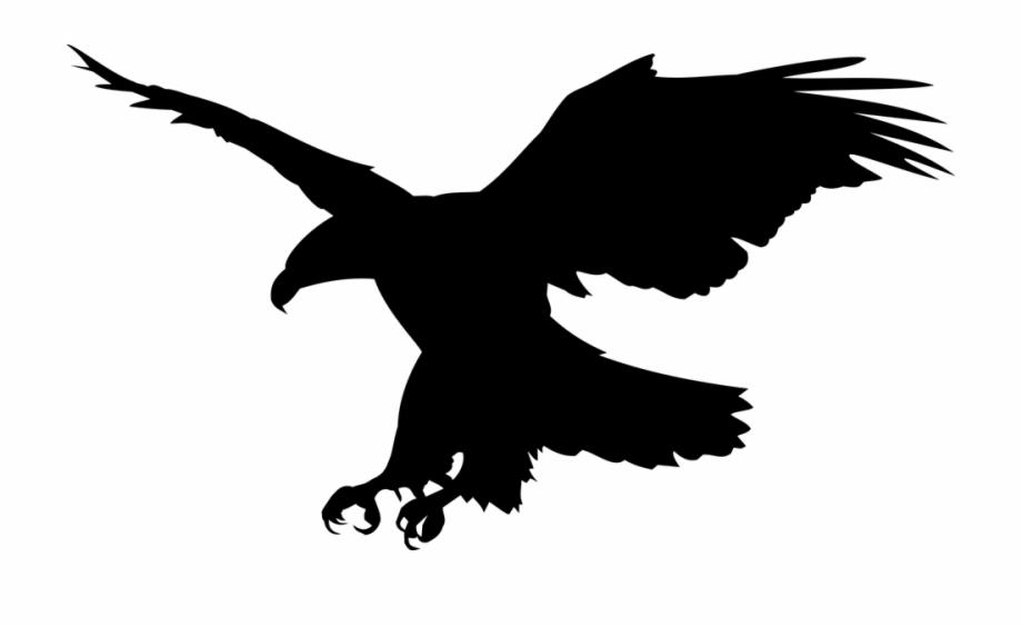 Clipart formato clip free download White Tailed Eagle Clipart Public Domain Aguia Formato - Clip Art ... clip free download
