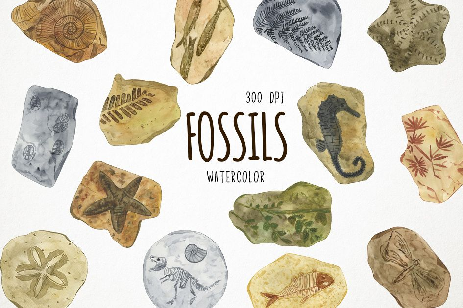 Clipart fossils clip art black and white download Watercolor Fossils Clipart, Fossils Clip Art, Fossil Clipart clip art black and white download