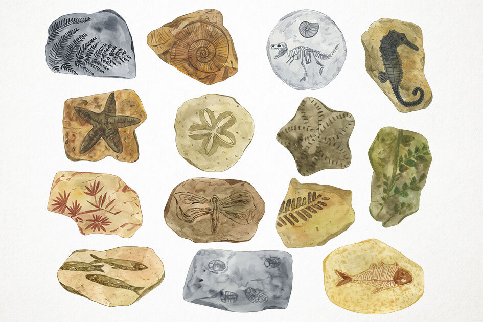 Clipart fossils vector royalty free Watercolor Fossils Clipart, Fossils Clip Art By Paulaparaula ... vector royalty free