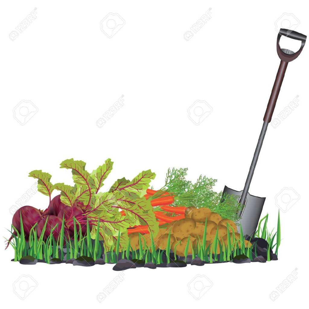 Clipart garden site svg freeuse library Vegetable Garden Companion Planting Guide Australia – gardening site svg freeuse library