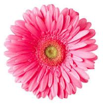 Clipart gerbera daisy picture black and white Image result for gerbera daisy clip art | Wall art | Gerber daisies ... picture black and white