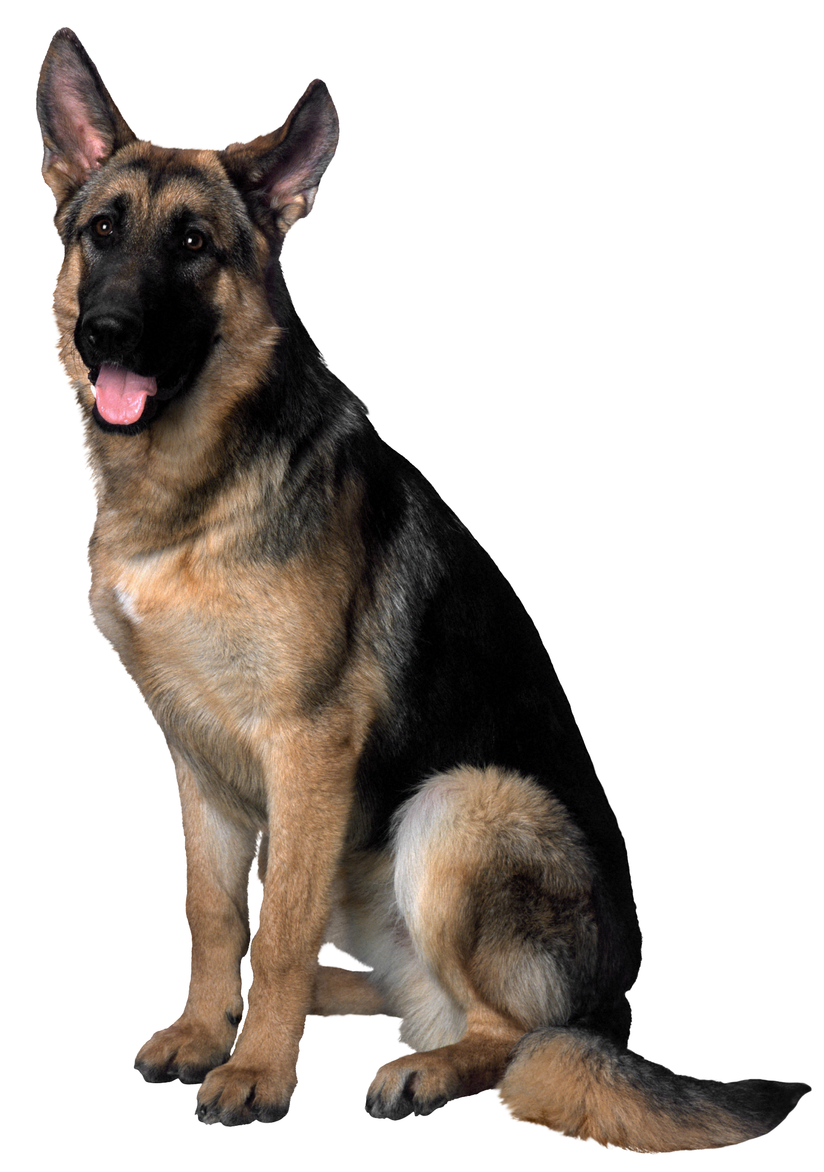 German shepherd dog clipart clipart freeuse stock Dog PNG Clip Art Image | Gallery Yopriceville - High-Quality Images ... clipart freeuse stock