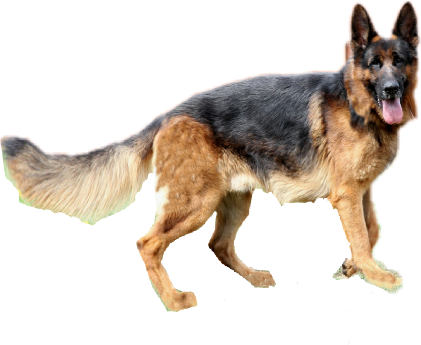 German shepherd dog clipart png free stock germanshepherd dog alsatian - Sticker by Taliafera png free stock