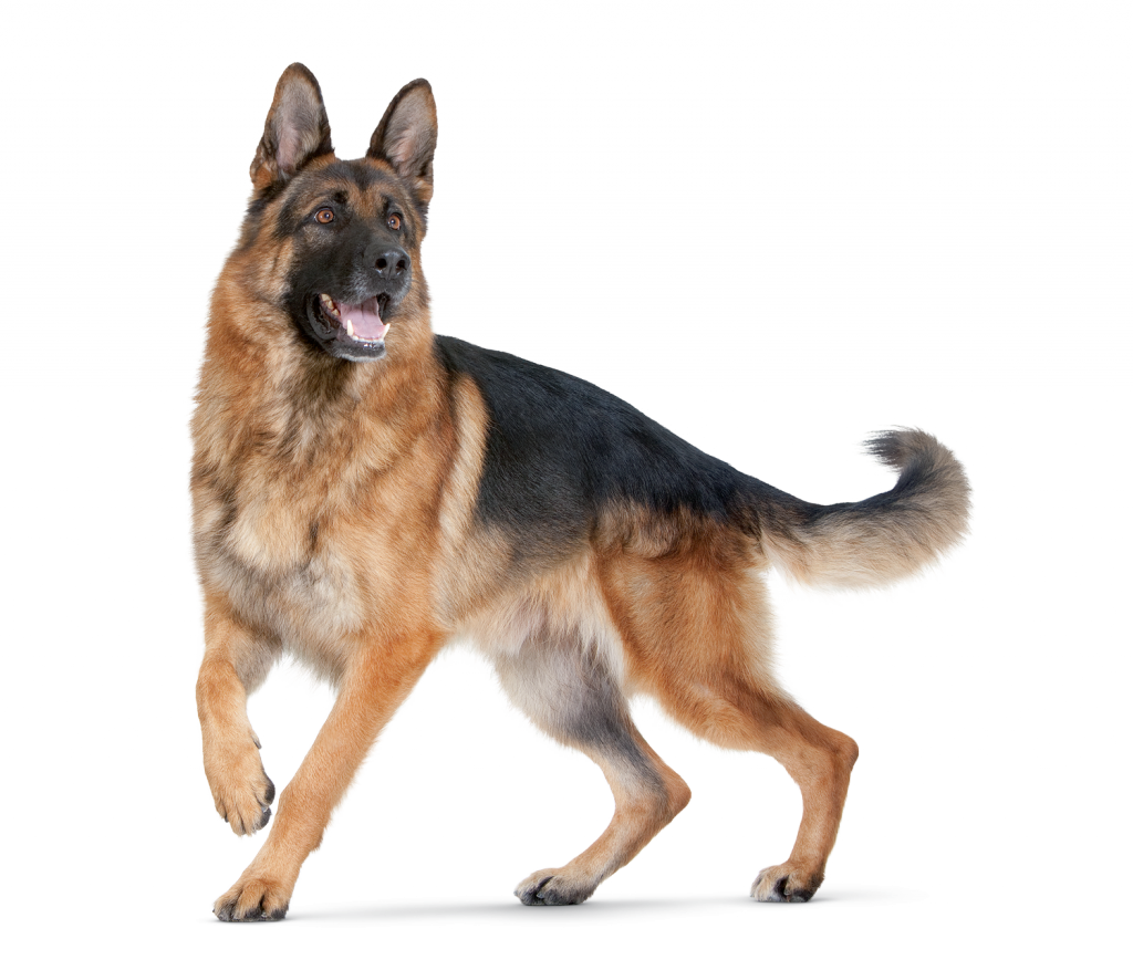German shepherd dog clipart png free dog - Google Search | živali | Pinterest | Dog, German shepherds and ... png free