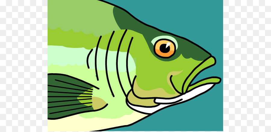 Clipart gills picture transparent library Fish Gills Clipart picture transparent library