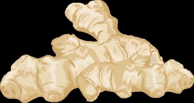 Clipart ginger