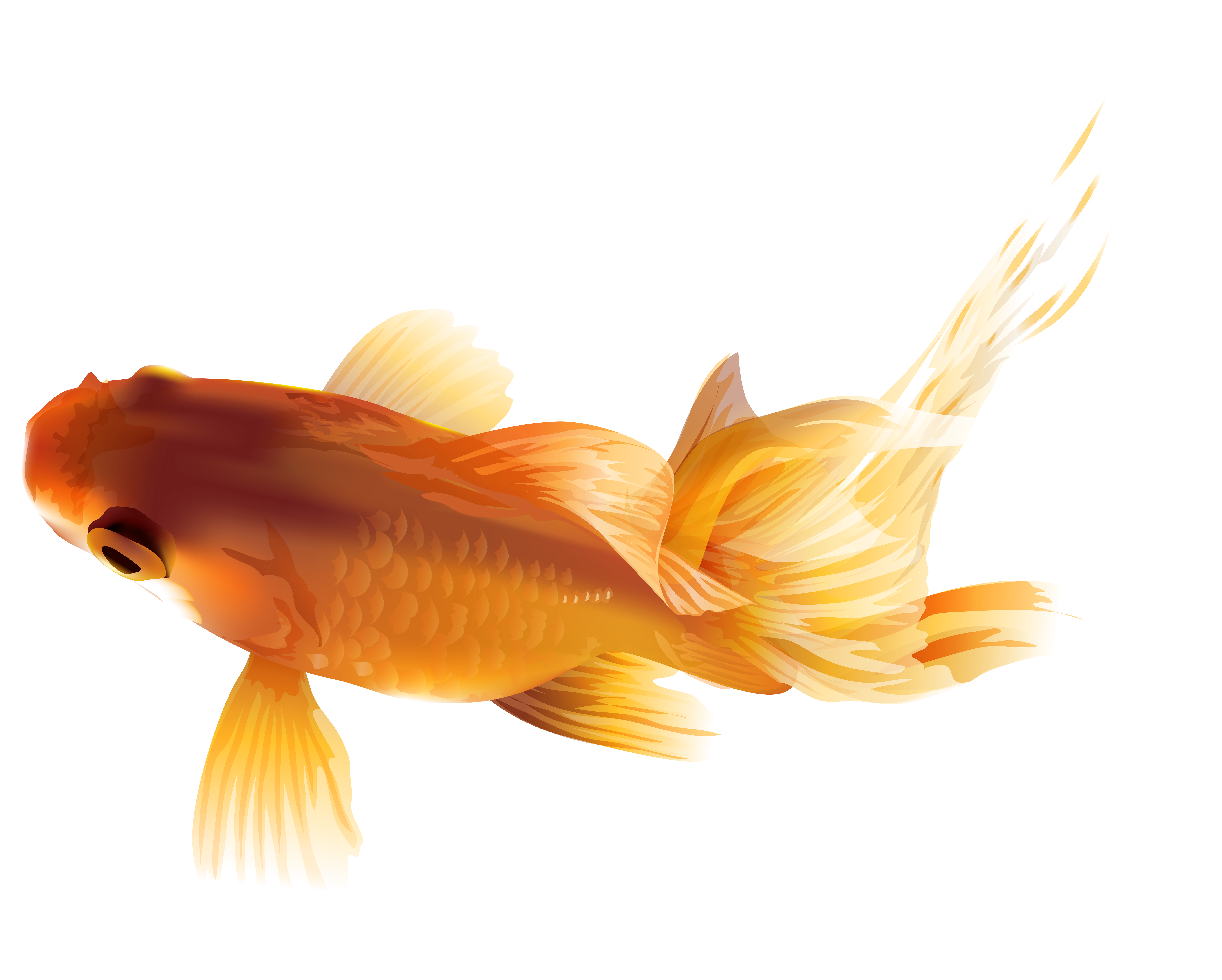 Clipart gold fish banner freeuse stock Goldfish PNG Transparent Clip Art Image | Gallery Yopriceville ... banner freeuse stock