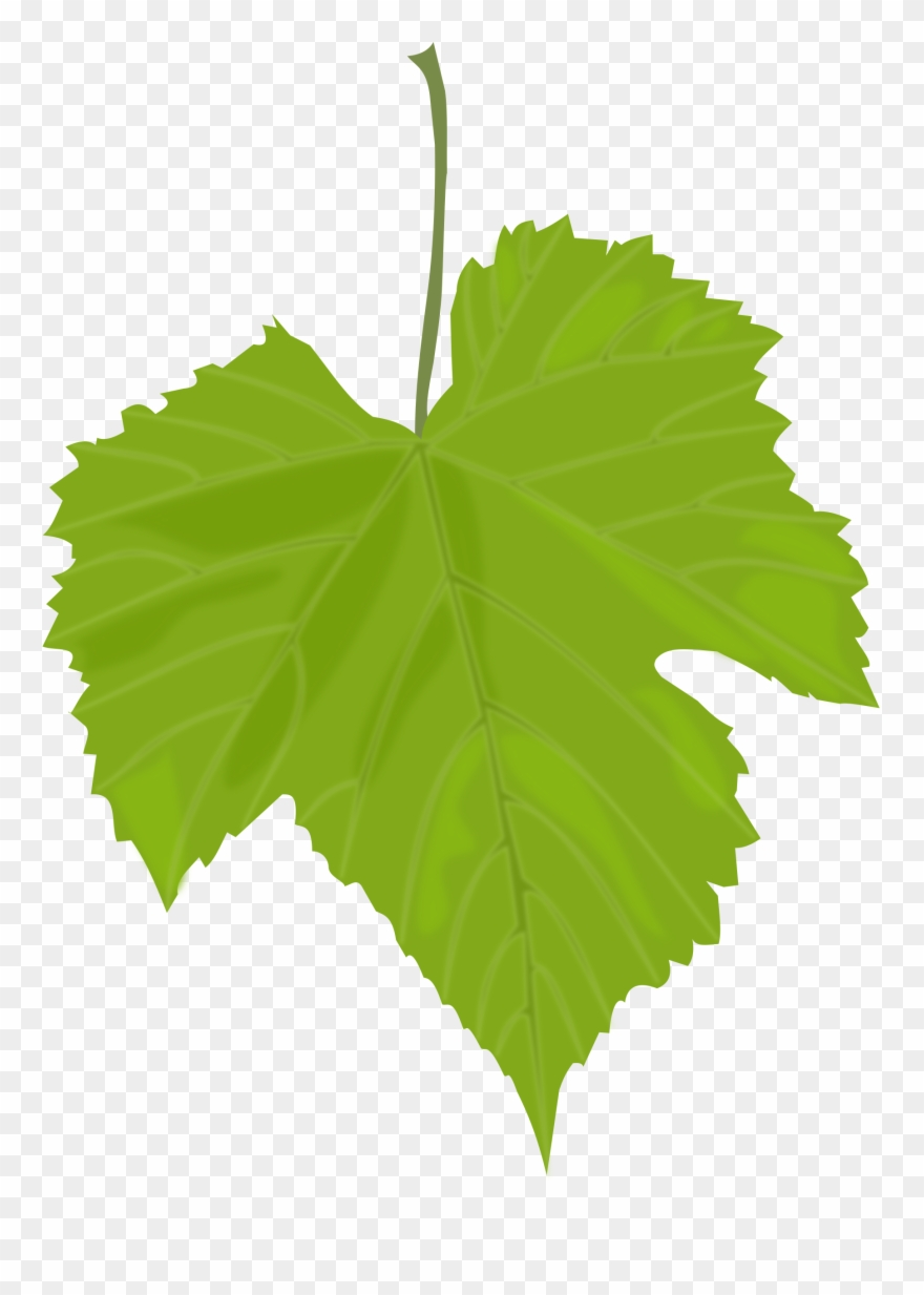 Leaves Clipart Birch Leaf - Grape Leaf Clip Art - Png Download ... image library library