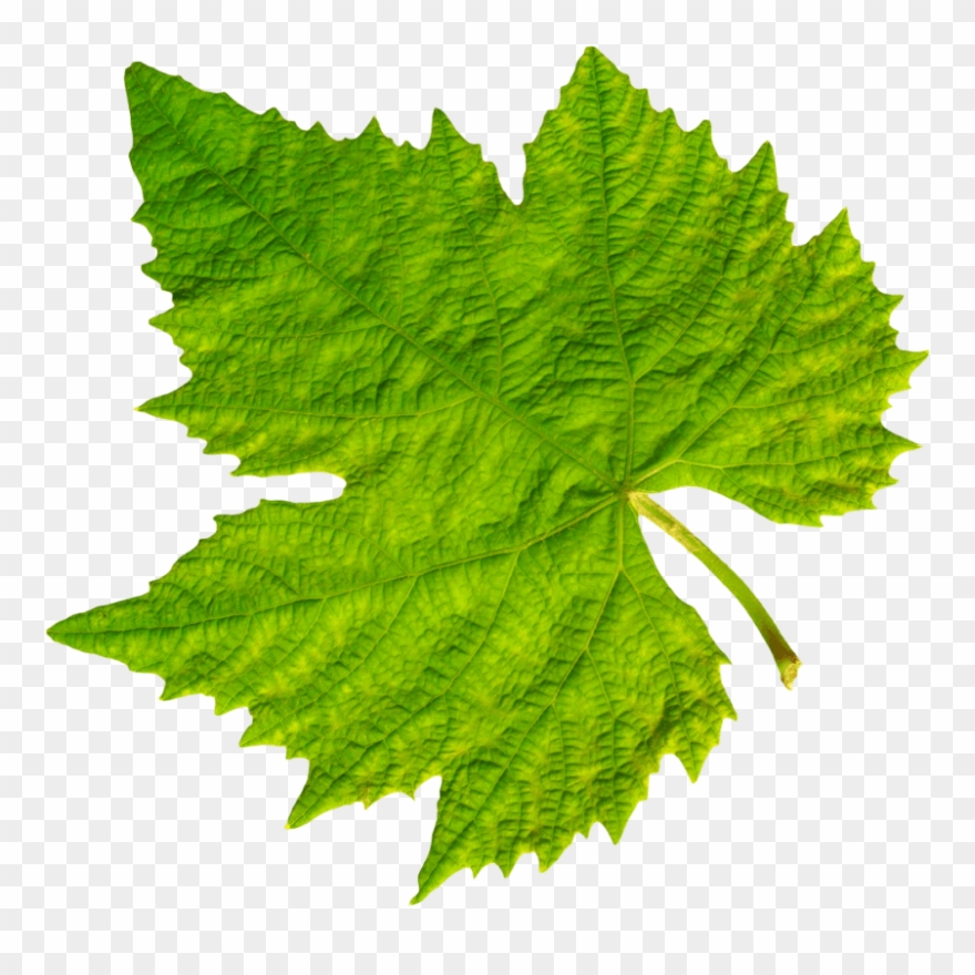Download Grape Vine Leaf Png Images Background - Grape Leaf Png ... picture royalty free download