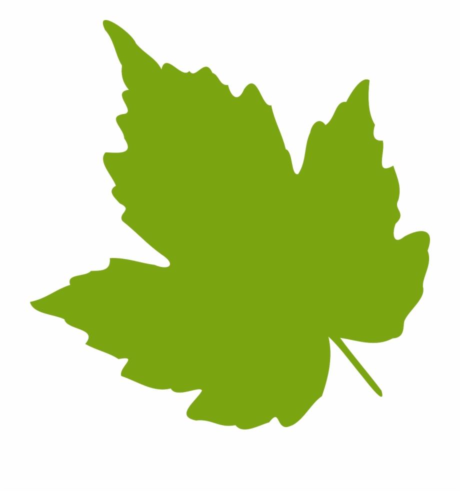 Clipart grape leaves svg royalty free library Oak Leaf Png - Clip Art Grape Leaves | Transparent PNG Download ... svg royalty free library