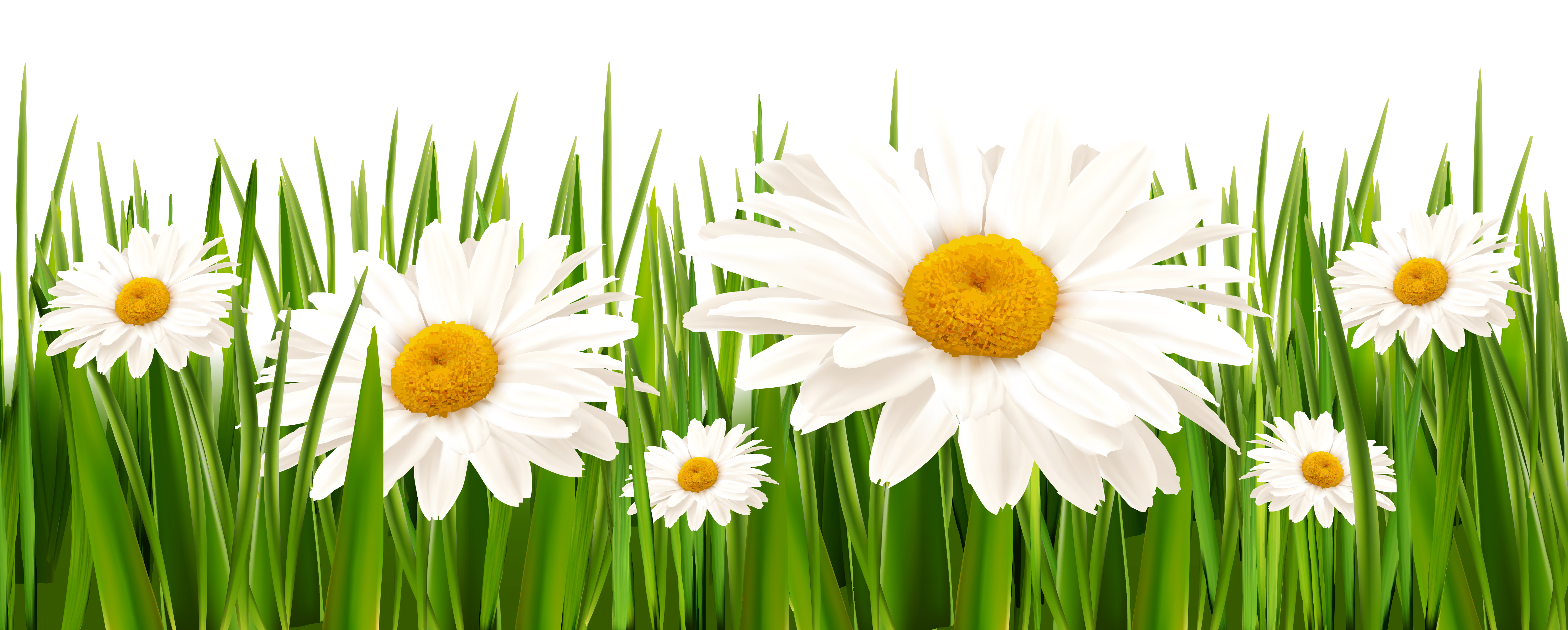 Clipart grass and flowers png stock Grass and White Flowers PNG Clipart png stock