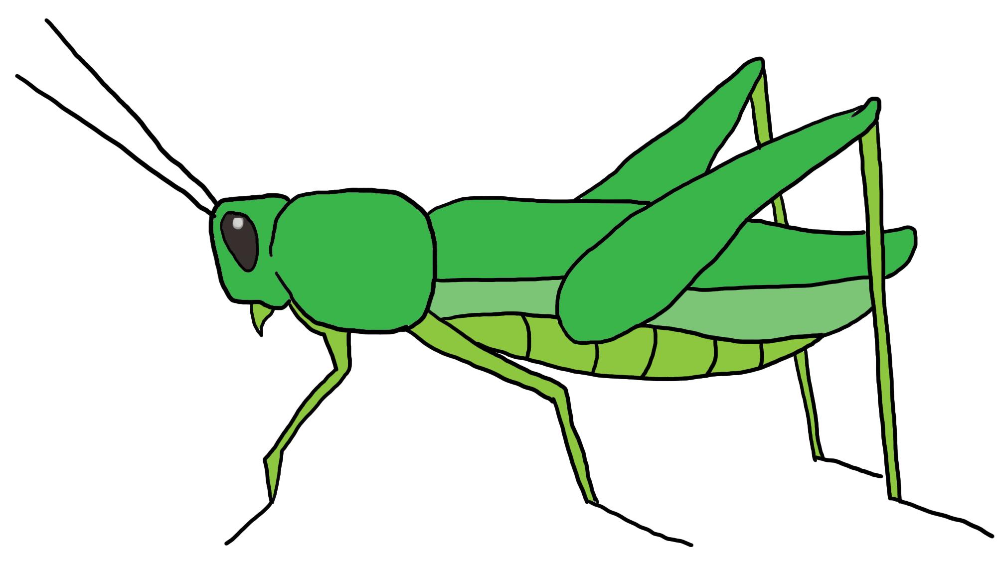 Clipart grasshopper clip art library stock Best Grasshopper Clipart #9847 - Clipartion.com clip art library stock