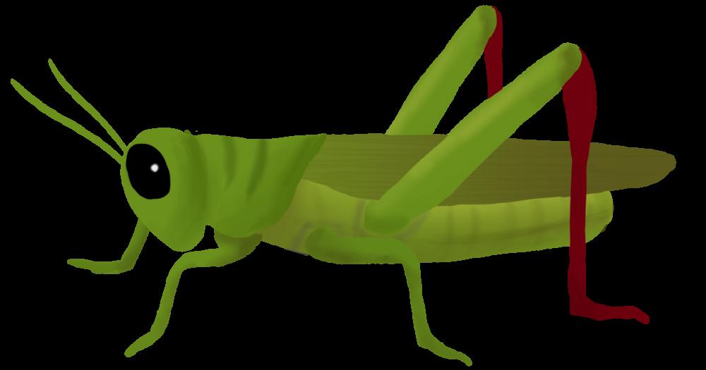 Clipart grasshopper png transparent download Download Grasshopper PNG Clipart 182 - Free Transparent PNG Images ... png transparent download