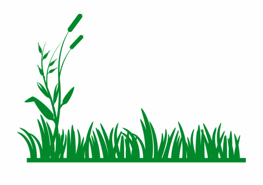 Clipart green grass clip art free stock Grass Plants Green - Grass Border Clipart Free PNG Images & Clipart ... clip art free stock