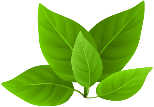 Clipart green leaves download Green Leaves PNG Clip Art #29279 - PNG Images - PNGio download