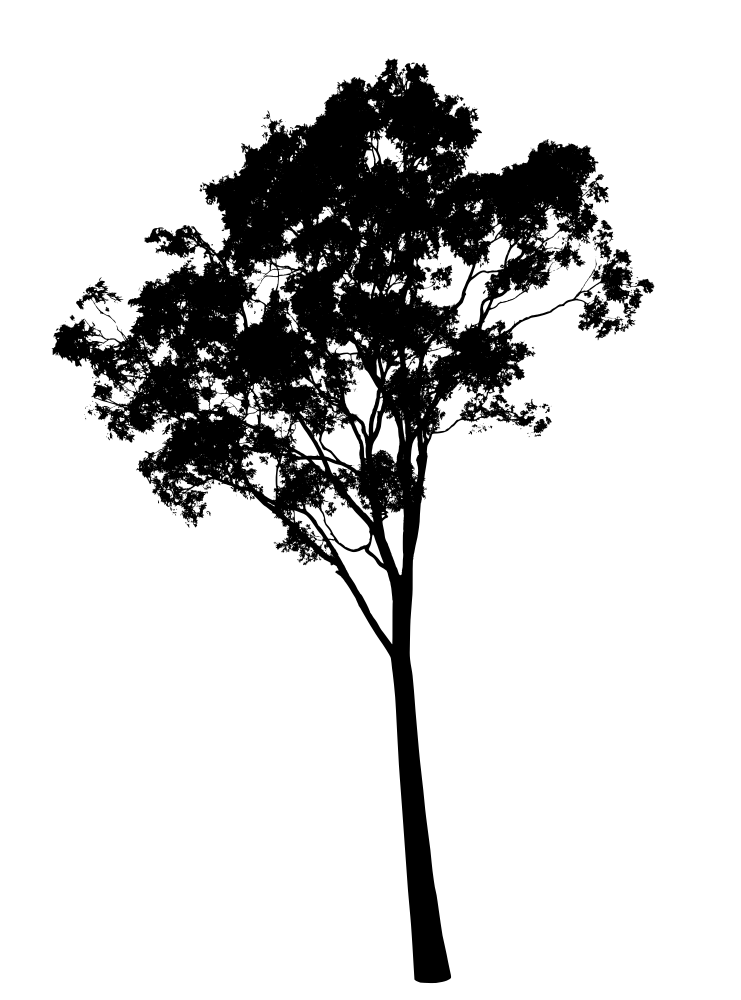 Clipart gum tree banner download Gum Tree Silhouette - Eucalyptus Tree - Rooweb Clipart banner download