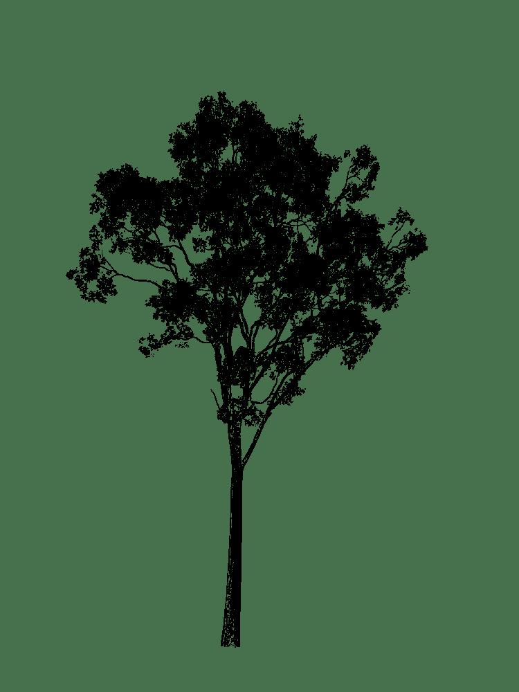 Clipart gum tree jpg black and white stock Eucalyptus Silhouette - Gum Tree - Rooweb Clipart jpg black and white stock