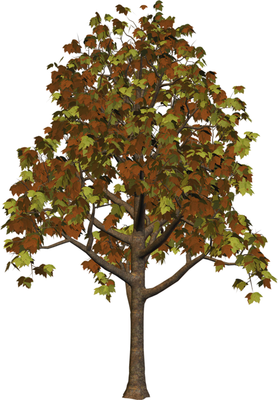 Clipart gum tree clip art download Large Fall Tree PNG Clipart | Gallery Yopriceville - High-Quality ... clip art download