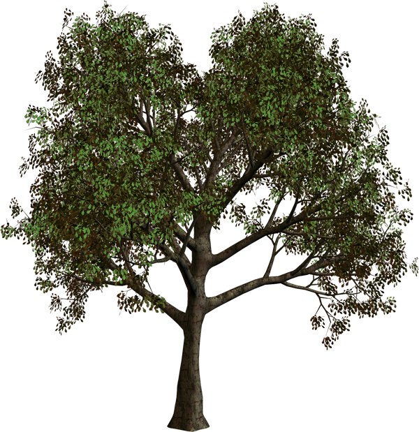 forest tree clipart #16