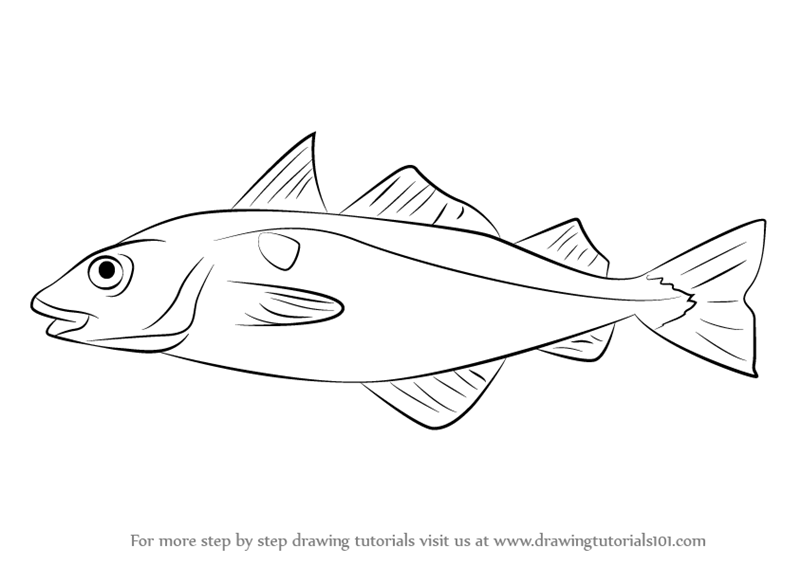 Clipart haddock svg transparent library Learn How to Draw a Haddock (Fishes) Step by Step : Drawing ... svg transparent library