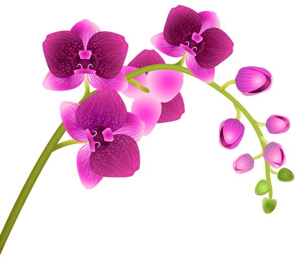 Flower transparent background clipart image transparent stock Orchid Flower Transparent PNG Clip Art Image | ClipArt | Pinterest ... image transparent stock