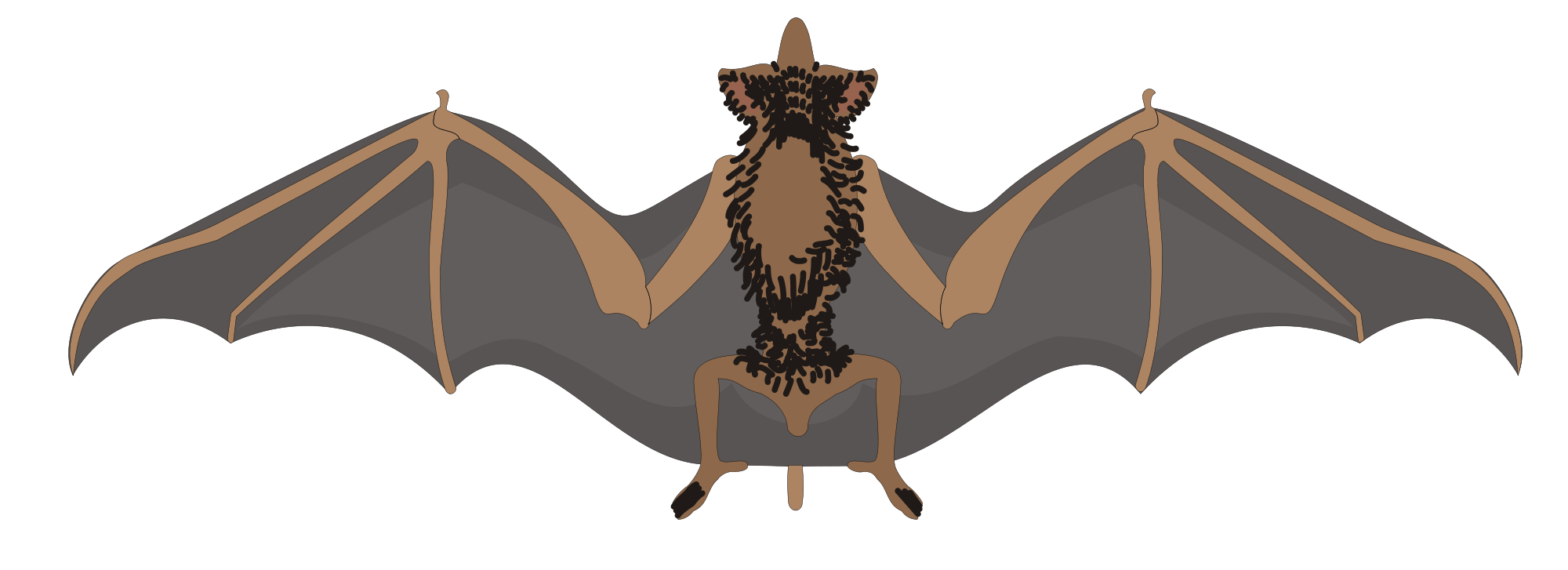 Clipart halloween bat download File:Bat clipart.svg - Wikimedia Commons download