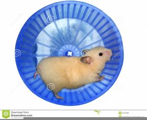 Clipart hamster wheel jpg black and white Free Clipart Hamster Wheel | Free Images at Clker.com - vector clip ... jpg black and white