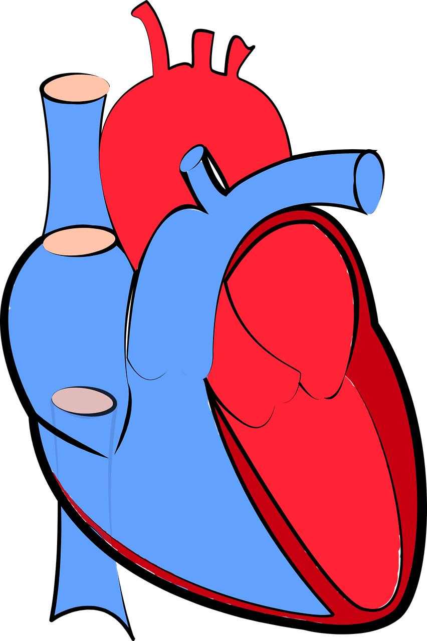 Clipart heart disease clip free Researchers Discover A Protein Which Could Treat Various Heart Diseases clip free
