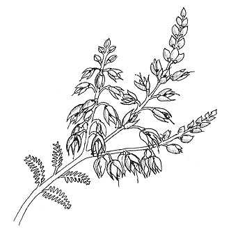 Clipart heather vector royalty free stock Free White Heather Cliparts, Download Free Clip Art, Free Clip Art ... vector royalty free stock