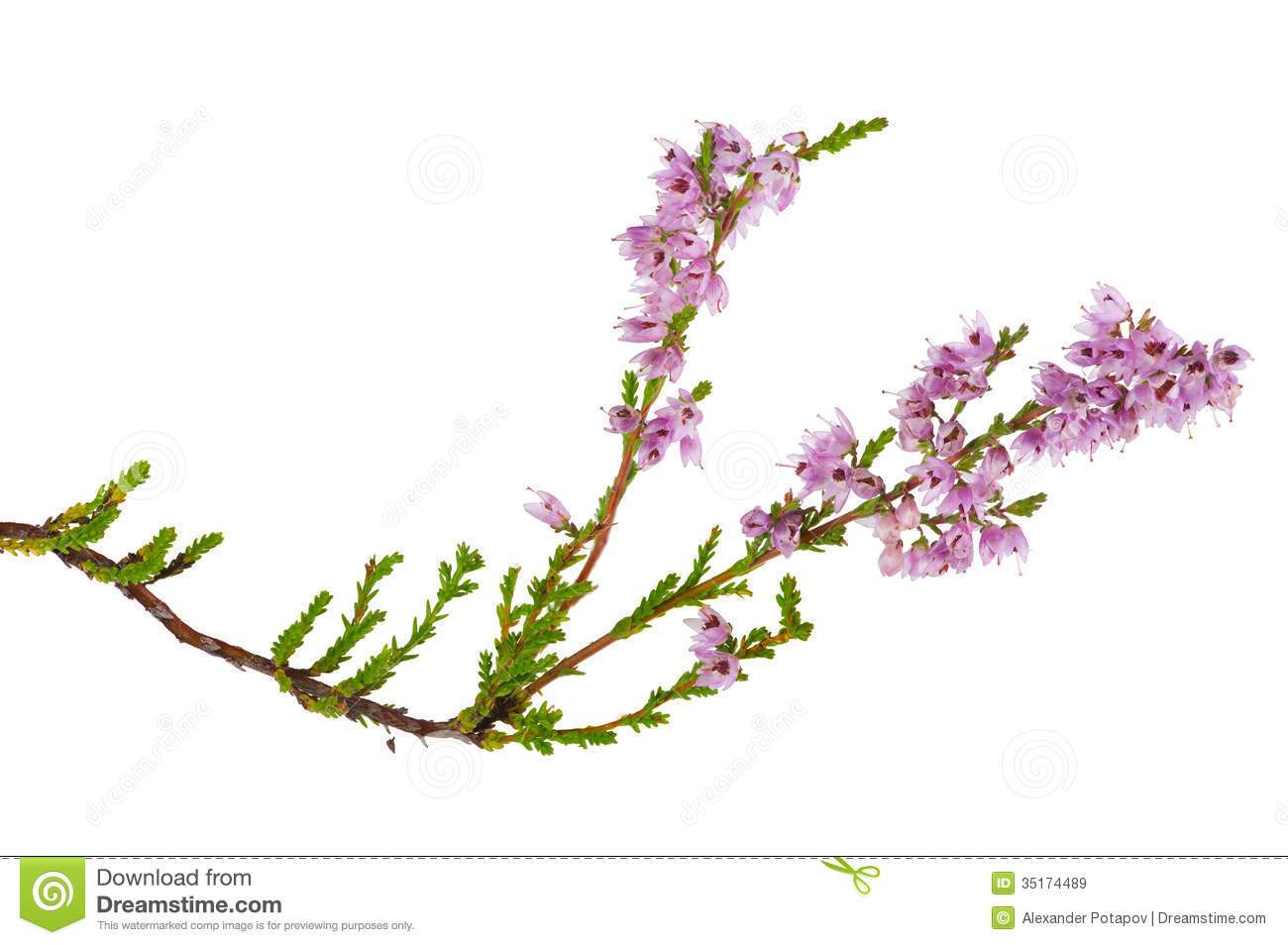 Clipart heather png library Heather clipart 3 » Clipart Portal png library