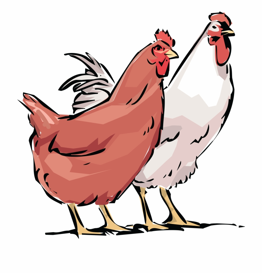 Clipart hens clip download Clip Art Library Stock Free Rooster Clipart - Hens Cliparts Free PNG ... clip download