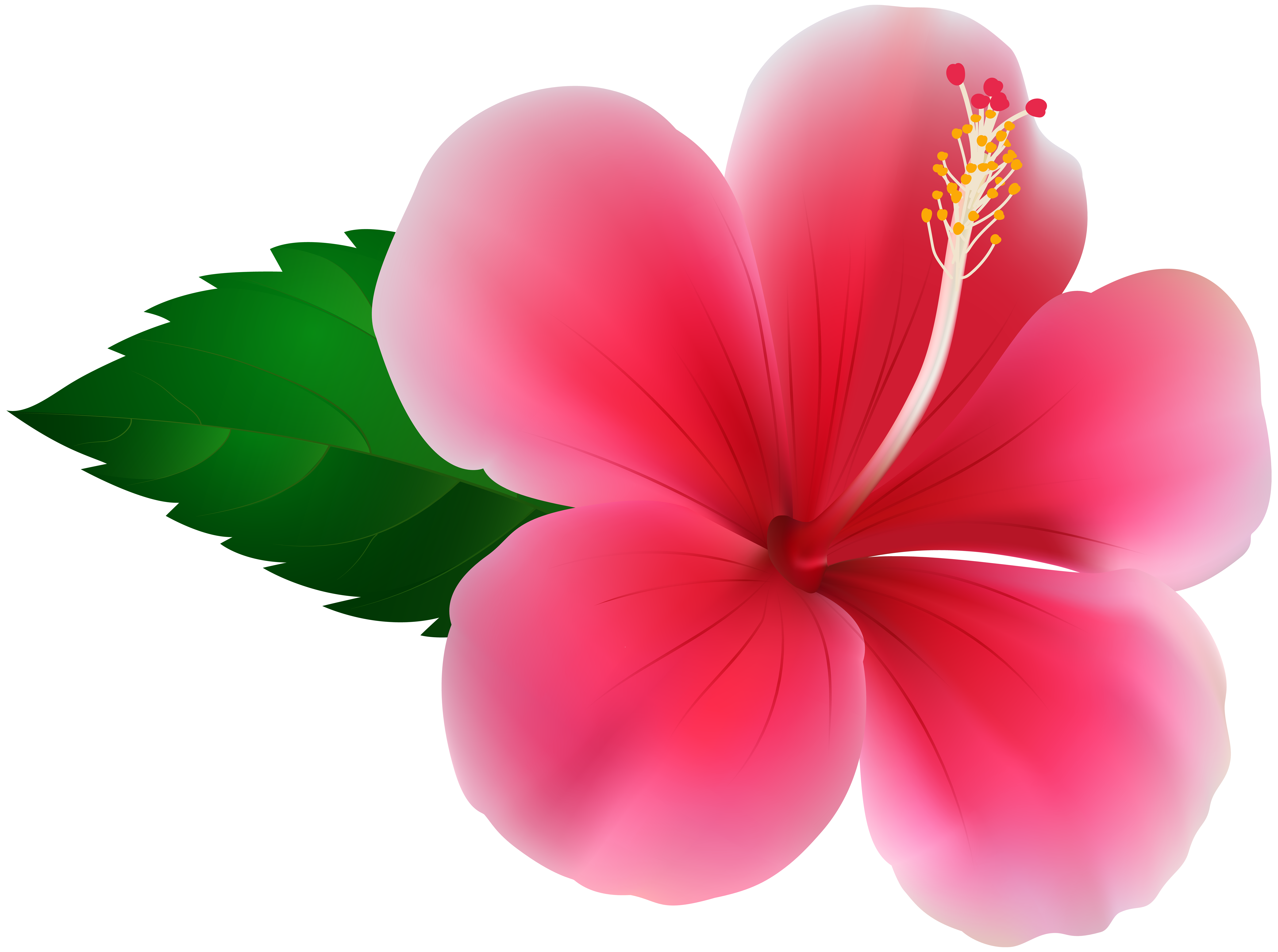 Hibiscus clipart images clipart freeuse download Pink Hibiscus PNG Clip Art Image | Gallery Yopriceville - High ... clipart freeuse download