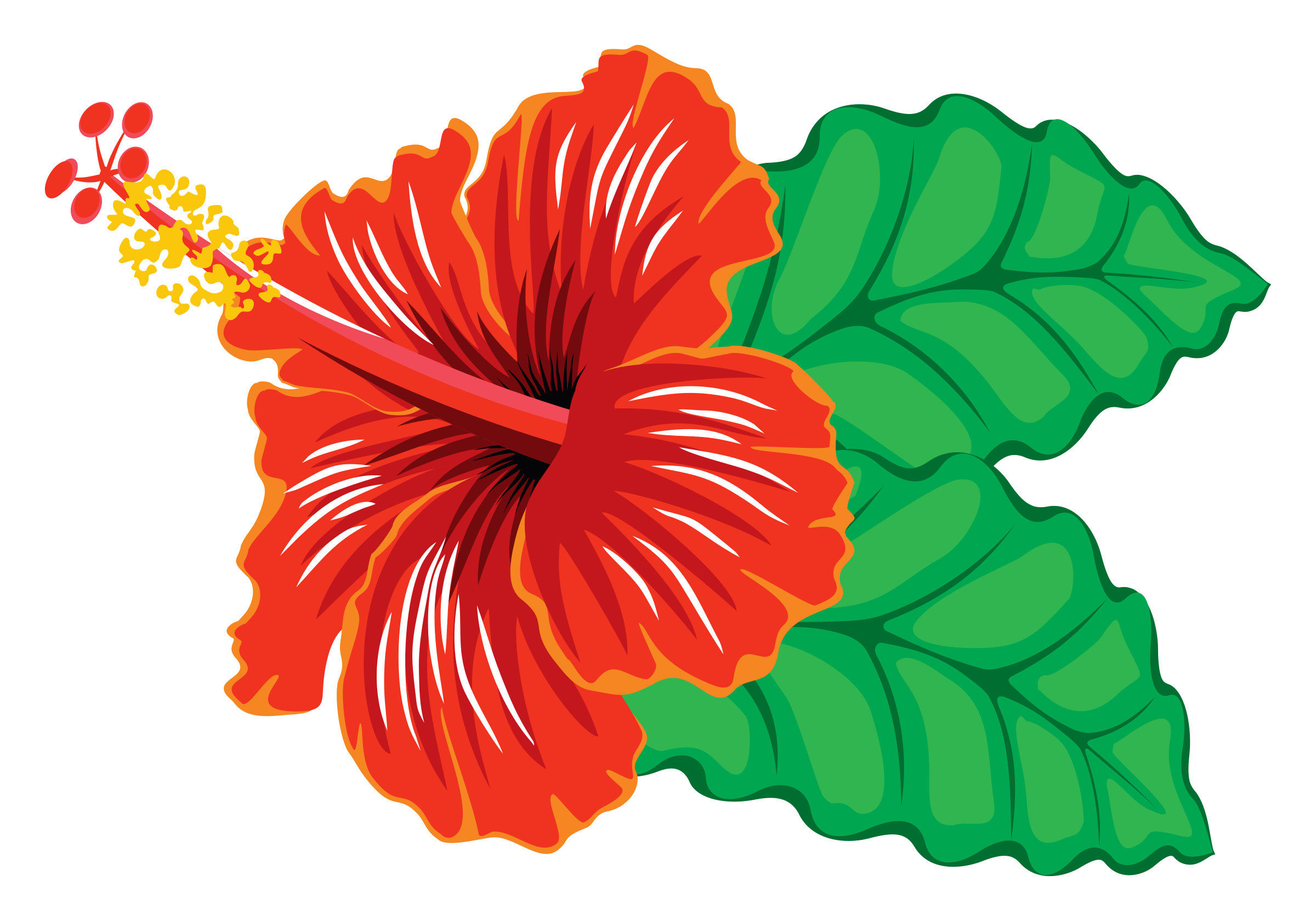 Free hibiscus flower clipart jpg transparent download 28+ Collection of Red Hibiscus Clipart | High quality, free cliparts ... jpg transparent download