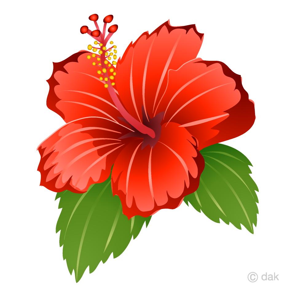 Hibiscus clipart free jpg freeuse stock Hibiscus Clipart Free Picture|Illustoon jpg freeuse stock
