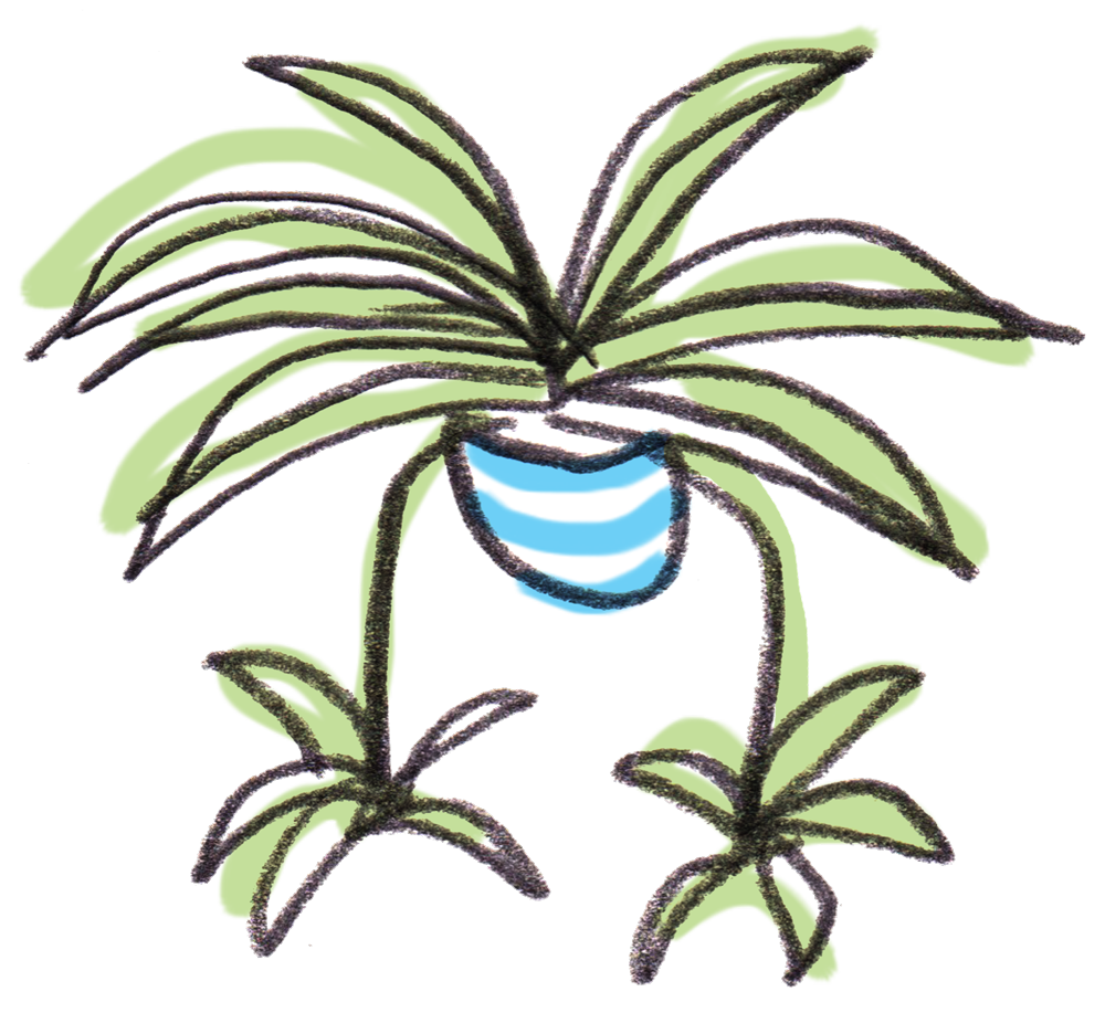 Welcome to Spiderplant, houseplant shop - Spider Plant Shop - Indoor ... png royalty free download