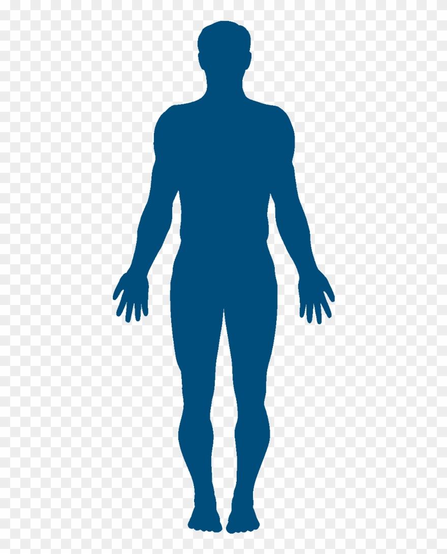Human clipart banner freeuse stock Human Body Silhouette Clipart (#3354196) - PinClipart banner freeuse stock