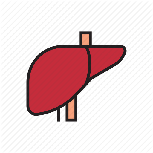 Clipart human liver picture freeuse library \'INTERNAL ORGANS\' by BAKAR015 picture freeuse library