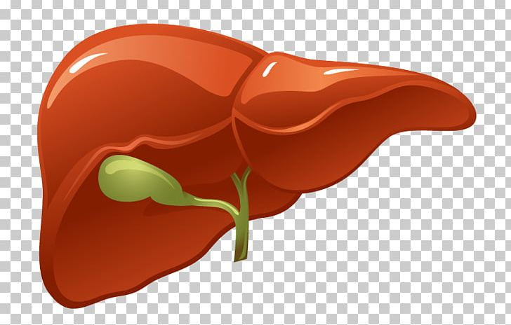 Clipart human liver image transparent Organ Liver Human Body Kidney PNG, Clipart, Artery, Bile, Cirrhosis ... image transparent