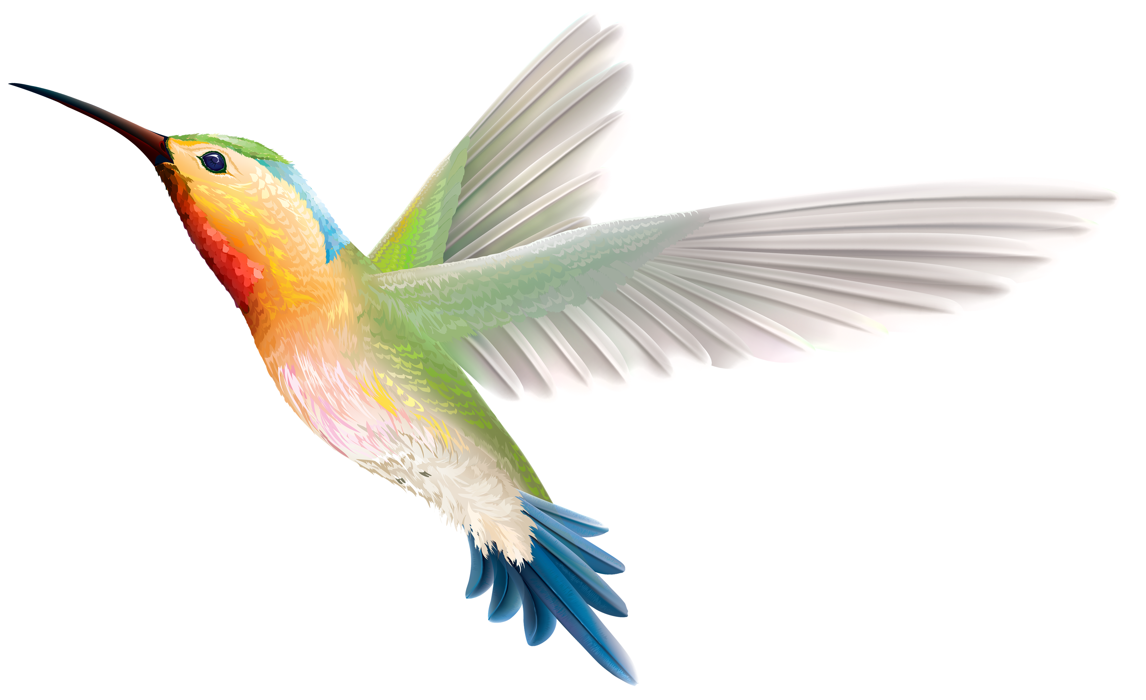 Clipart hummingbird picture free download Hummingbird PNG Clipart - Best WEB Clipart picture free download