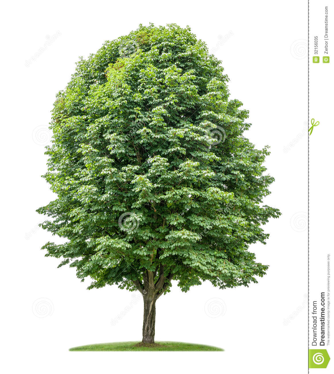 Clipart image of a moon chestnut tree vector free library Free Chestnut Tree Cliparts, Download Free Clip Art, Free Clip Art ... vector free library