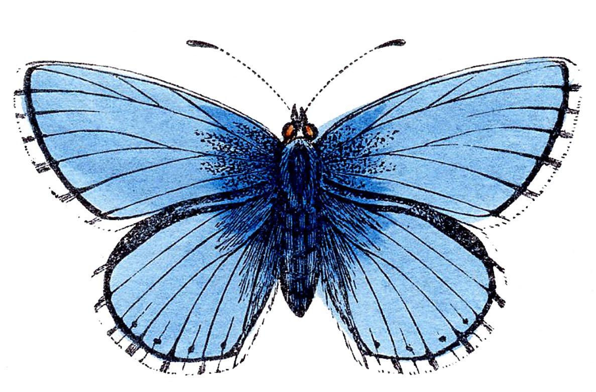 Clipart images for april butterflies. Clipartfest vintage clip art