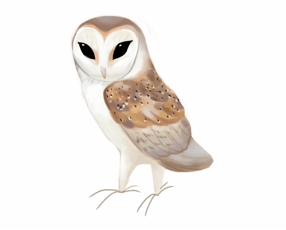 Clipart images of a barn owl jpg transparent stock Western Barn Owl Tyto Alba - Barn Owl Free PNG Images & Clipart ... jpg transparent stock